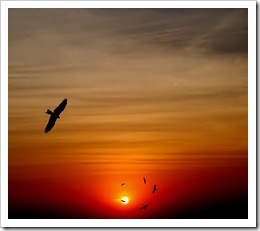 Birds soaring against the sunset