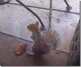 squirrel_window